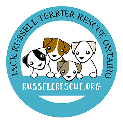 Jack Russell Terrier Rescue of Ontario